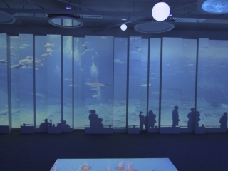 Interactive Floor in Educational Immersive Space installed by 4D Creative Ltd - http://www.4dcreative.co.uk
