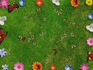 Interactive Butterflies
