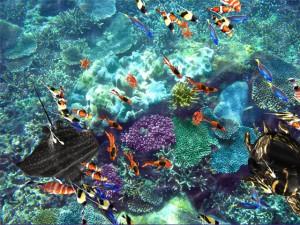 Interactive Sealife