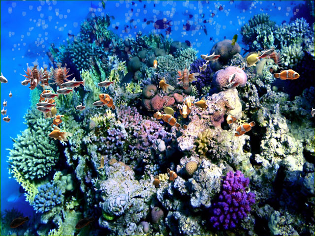 Interactive Coral Reef effect with Stunning Sealife and Interactive Bubbles